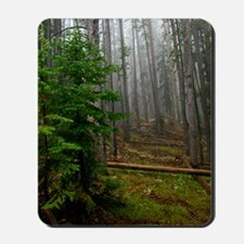 Pine forests 2 Mousepad