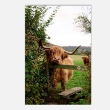 Highland cow Postcards (Package of 8)