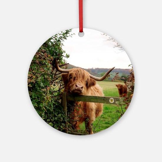 Highland cow Round Ornament