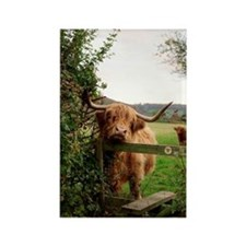 Highland cow Rectangle Magnet
