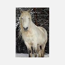 Highland pony Rectangle Magnet