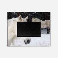 Highland ponies Picture Frame