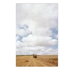 Harvested field Postcards (Package of 8)