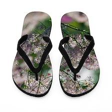 Meadow Rue (Thalictum sp.) Flip Flops