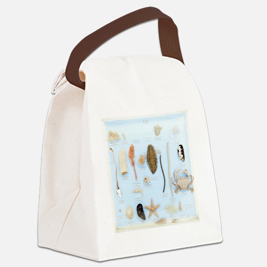 Marine life specimens Canvas Lunch Bag