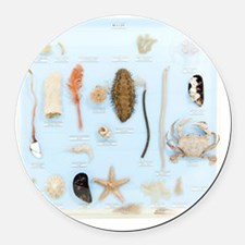 Marine life specimens Round Car Magnet