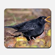 Male blackbird calling Mousepad