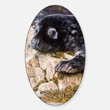 Grey seal pup Sticker (Oval)