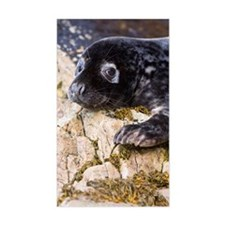 Grey seal pup Decal