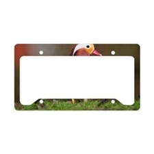 Male mandarin duck License Plate Holder