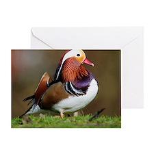 Male mandarin duck Greeting Card