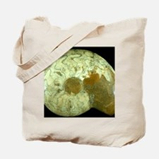 Goniatite fossil Tote Bag