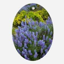 Lupinus albifrons and Haplopappus sp Oval Ornament