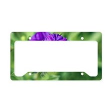 Lycianthes rantonnetii License Plate Holder