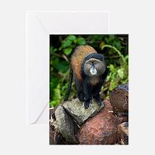 Golden monkey Greeting Card