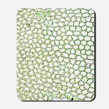 Liverwort leaf tissue, light micrograph Mousepad