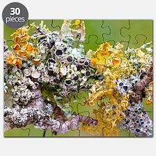 Lichens on Blackthorn Puzzle
