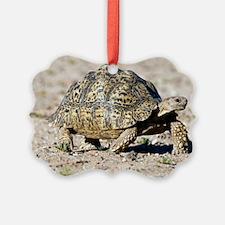 Leopard tortoise Ornament