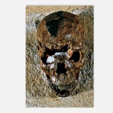 Fossilised skull of a Hom Postcards (Package of 8)