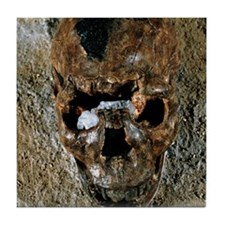 Fossilised skull of a Homo erectus bo Tile Coaster