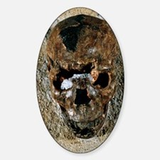 Fossilised skull of a Homo erectus  Decal