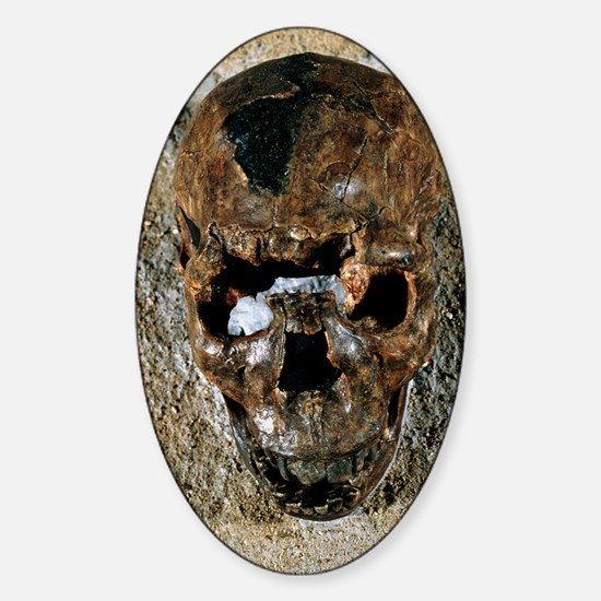 Fossilised skull of a Homo erectus  Sticker (Oval)