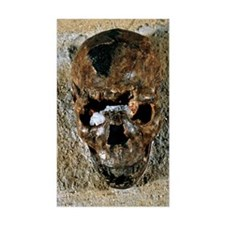 Fossilised skull of a Homo ere Decal