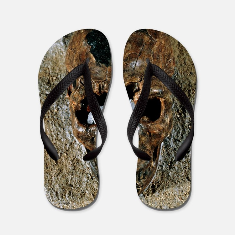 Fossilised skull of a Homo erectus boy  Flip Flops