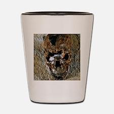 Fossilised skull of a Homo erectus boy  Shot Glass