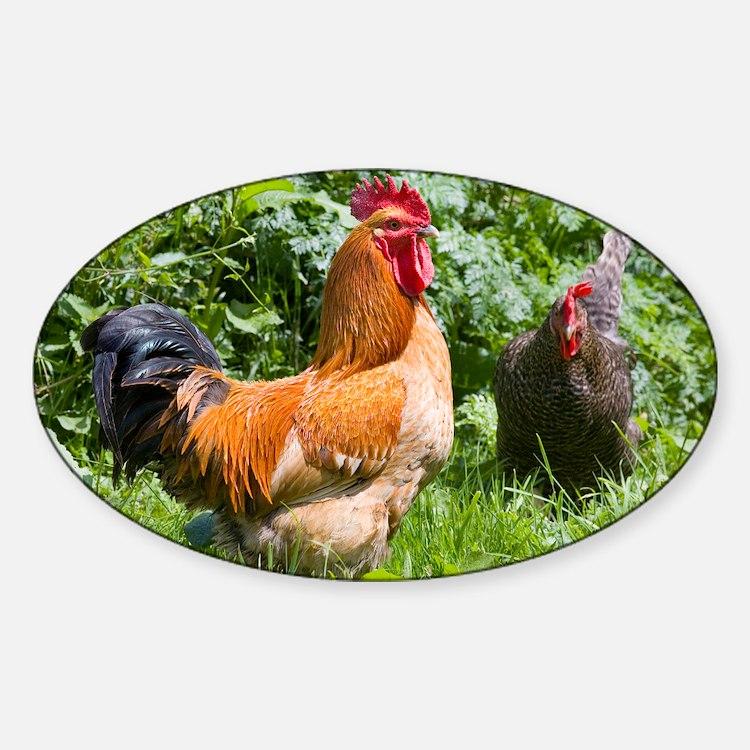 Free-range chickens Sticker (Oval)
