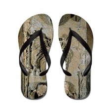 Fossilised skeleton of Homo erectus boy Flip Flops