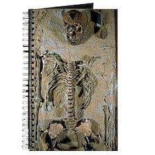 Fossilised skeleton of Homo erectus boy fr Journal