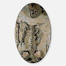 Fossilised skeleton of Homo erectus Decal