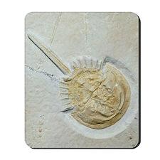 Fossilised horseshoe crab Mousepad