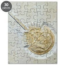 Fossilised horseshoe crab Puzzle