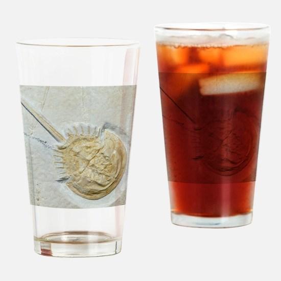 Fossilised horseshoe crab Drinking Glass