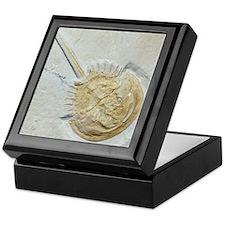 Fossilised horseshoe crab Keepsake Box