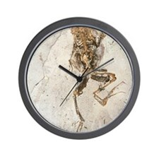 Fossilised frog embedded in rock Wall Clock