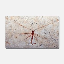 Lacewing fossil Car Magnet 20 x 12