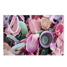 Fossilised diatoms, SEM Postcards (Package of 8)