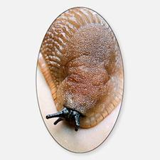 Large black slug Decal