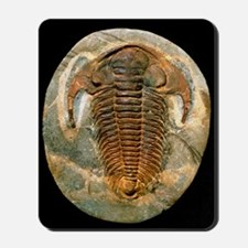 Fossil trilobite from the Cambrian perio Mousepad
