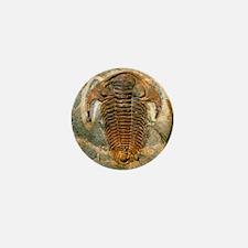 Fossil trilobite from the Cambrian per Mini Button