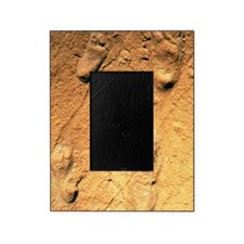 Fossilised hominid footprints from L Picture Frame