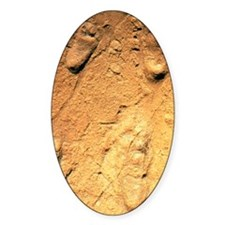Fossilised hominid footprints from  Decal