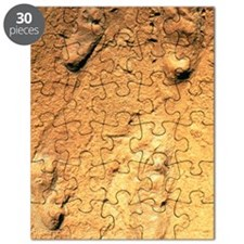 Fossilised hominid footprints from Laetoli Puzzle