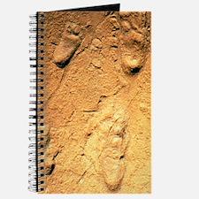 Fossilised hominid footprints from Laetoli Journal