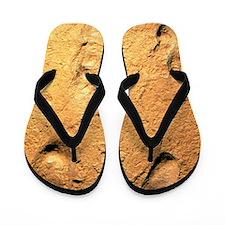 Fossilised hominid footprints from Laet Flip Flops