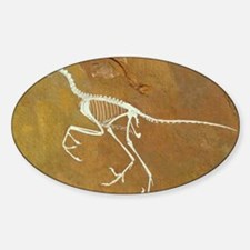 Fossil of Archaeopterix, one of the Decal