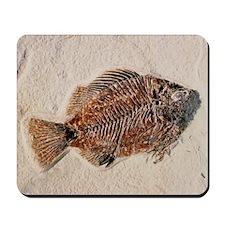 Fossilised fish, Priscacara serata Mousepad